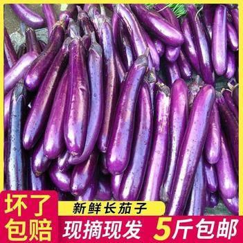 5斤新鲜长茄子四季蔬菜茄子现摘现发紫色茄子现摘现发茄子包邮