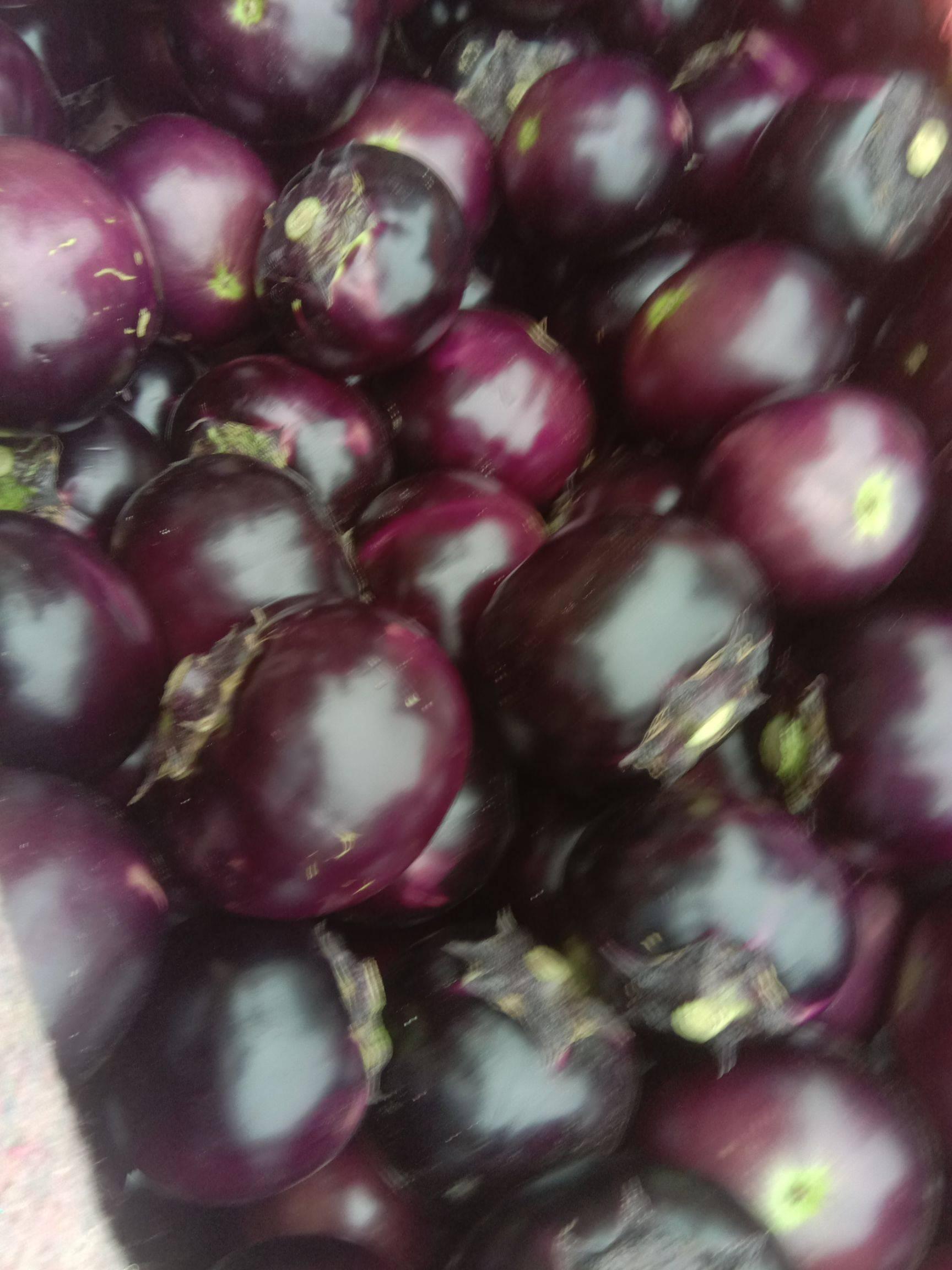 秋季剛上市的大棚茄子