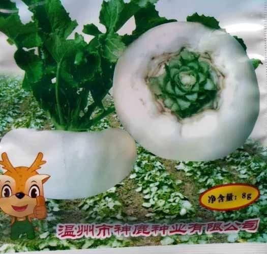 樟树市 温州盘菜种子楠溪盘菜种子大头菜种籽温州名贵蔬菜味美脆8克