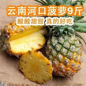 云南香水菠萝 果园自产 新鲜现摘 5/10斤装包邮