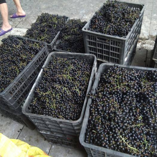 罗城仫佬族自治县 广西罗城葡萄上市了泡洒的佳品