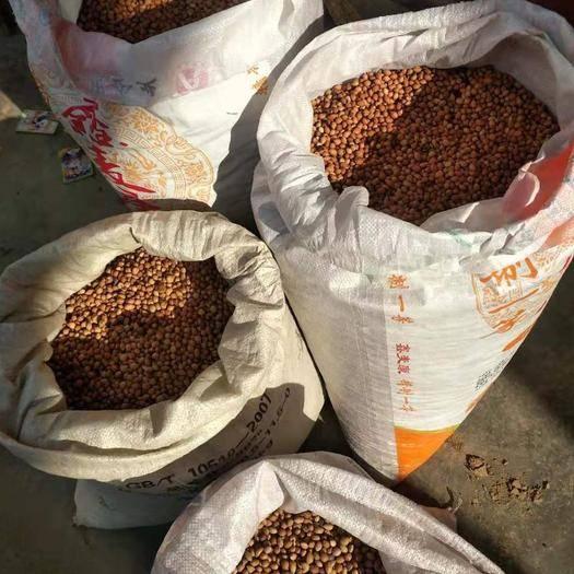 三门峡灵宝市 钙果种子