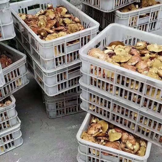 内蒙古自治区赤峰市喀喇沁旗松蘑 野生 鲜货