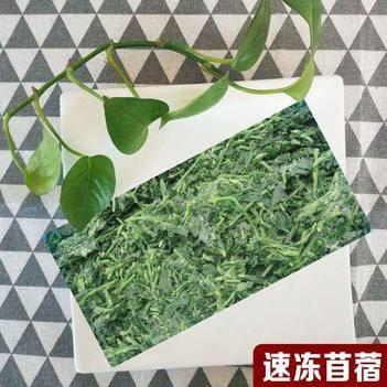 苜蓿芽 速冻苜蓿,养生长寿菜,全国常年供应