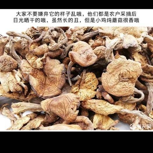 河北省承德市隆化县 纯农村山里野生榛蘑  小鸡炖蘑菇非常不错