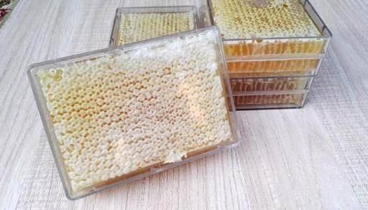伊犁昭苏县 成熟蜂蜜蜂巢蜜百花巢蜜嚼着吃550克一盒加量不加价