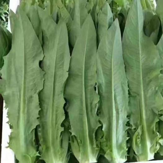 嵩明县青油麦 常年供应各种精品蔬菜,欢迎了解