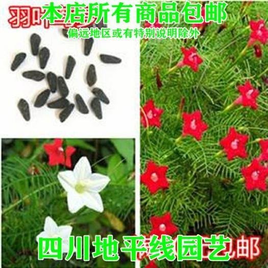 南充羽叶莺萝种子 羽叶茑萝种子低至122/斤