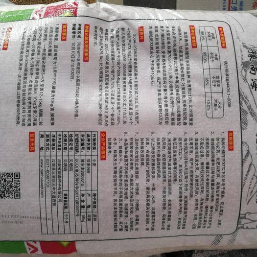 郑州二七区 项麦969小麦种子