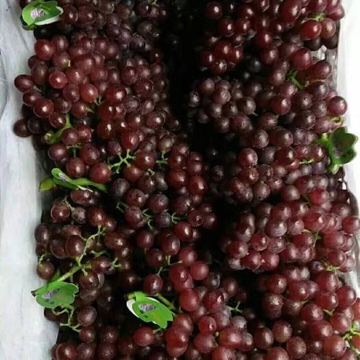 广宗县 红宝石葡萄大量上市