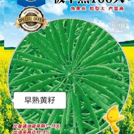 商丘夏邑县紫油菜种子