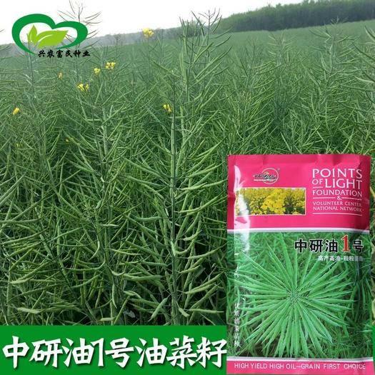 宜春樟樹市 中研油1號油菜籽種子 抗寒 抗病 抗倒伏 耐澇 耐旱性強