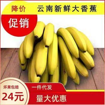 云南高山香甜大香蕉带箱10斤包邮一件代发