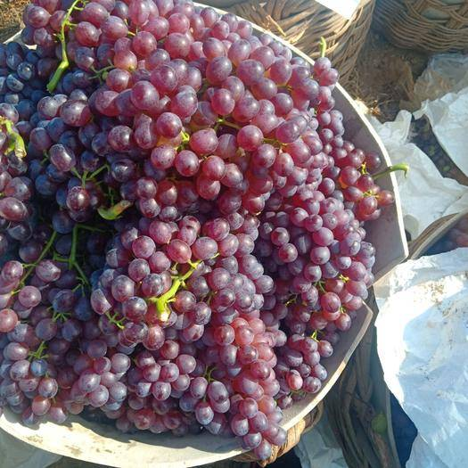栖霞市 无核红宝石葡萄已上市