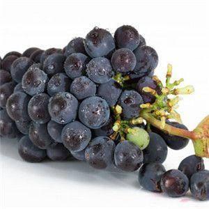 清徐县 自家种植健康、绿色、无公害早黑宝葡萄
