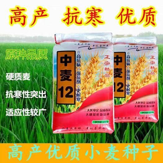 石家莊新華區 噸麥王高產優質小麥種子產量高抗病抗寒矮桿大穗抗倒抗旱低桿