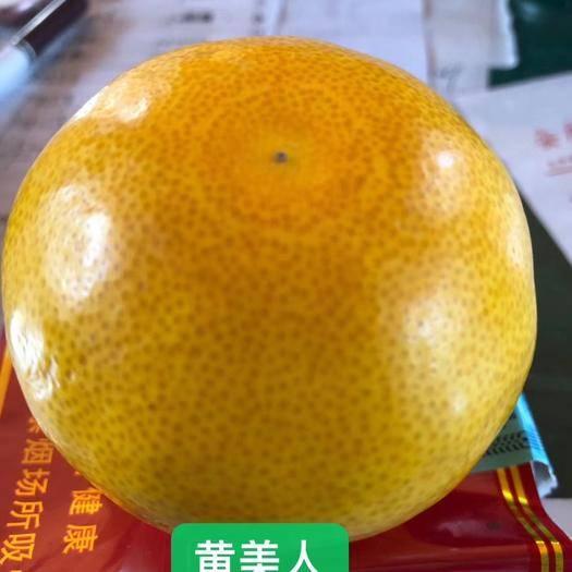 金华黄美人柑橘枝条 黄美人柑橘大苗,黄美人枝条