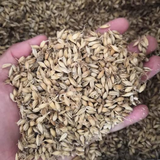 亳州譙城區 上等優質 麥芽 正宗小麥芽 炒麥芽 焦麥芽 各種規格