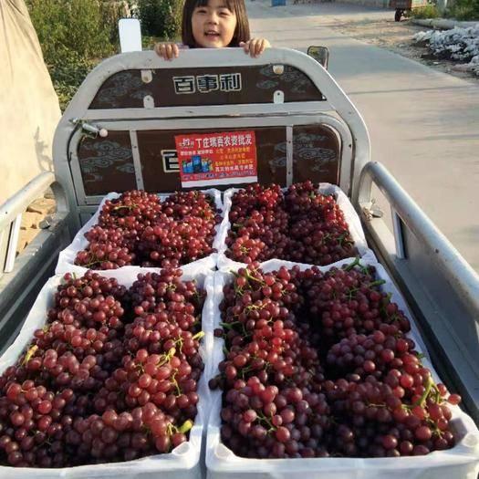 邯郸红宝石葡萄 2斤以上 5%以下 1次果