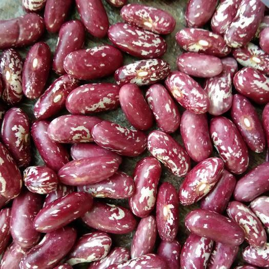 呼倫貝爾鄂倫春自治旗紫花蕓豆 19年新質量好,歡迎新老客戶來購買