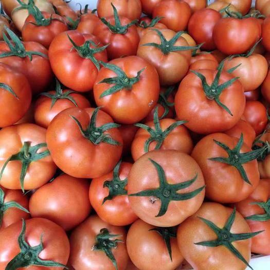 開遠市西貝西紅柿 精品 弧三以上 大紅