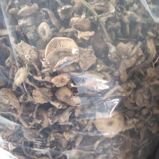 吉林省吉林市丰满区榛蘑 农家自采野生