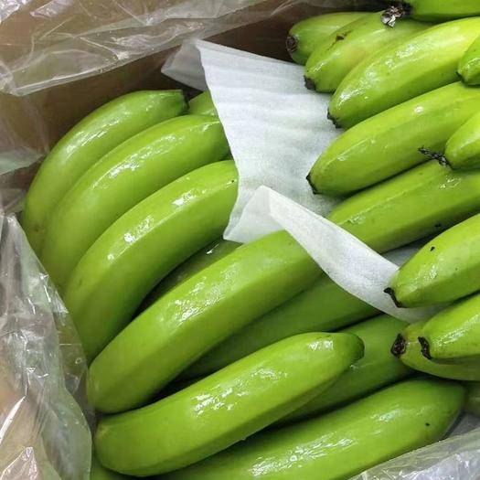 邯郸广东香蕉1号 七成熟