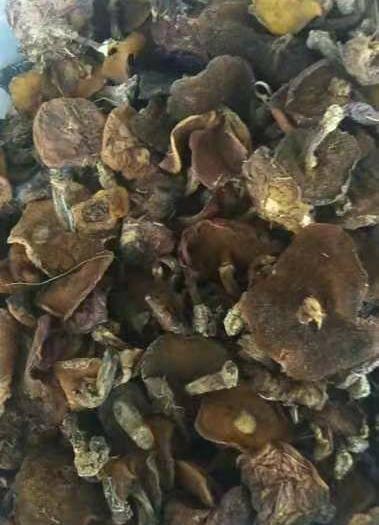 河北省承德市围场满族蒙古族自治县松蘑 纯野生,烘干,绝对超好品质