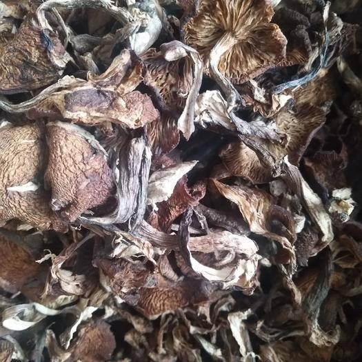 黑龙江省哈尔滨市尚志市 东北野生榛蘑