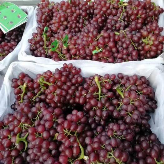 邯郸 红宝石葡萄大量上市,串型好,颜色深,口感二十多个糖。