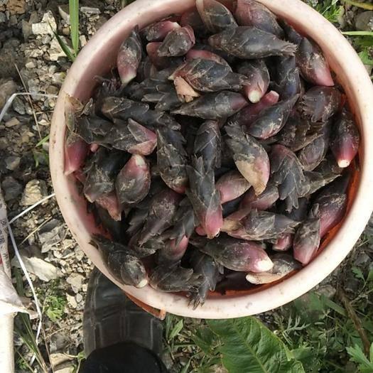 湖北省恩施土家族苗族自治州利川市阳荷 真正做到无农药,的绿色富硒农特产