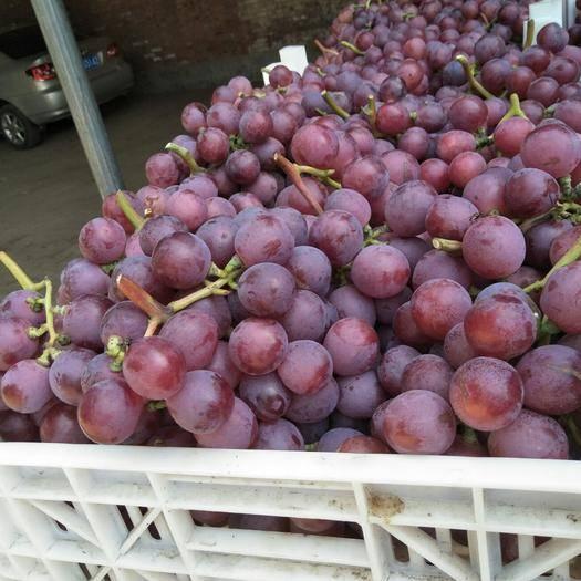 晋州市美国红提 2斤以上 5%以下 1次果