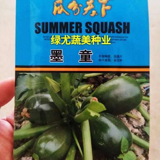 南靖县黑皮西葫芦种子 口感型高档西葫芦品种,耐低温,抗病毒,特高产,市场畅销
