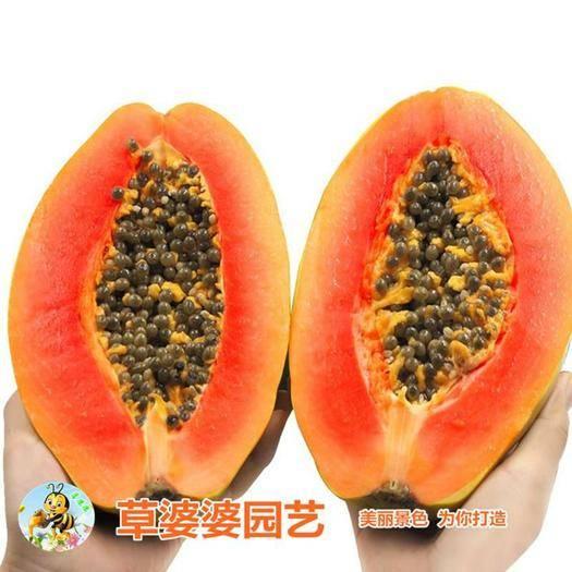 宿迁沭阳县 木瓜种子新种子包邮