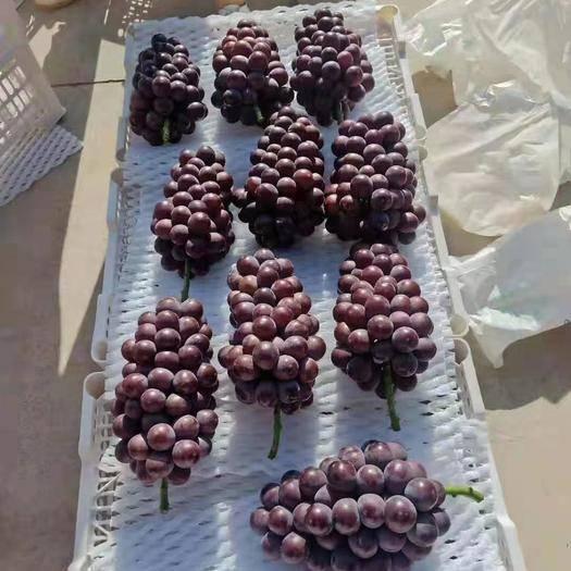 邯郸 葡萄大量上市