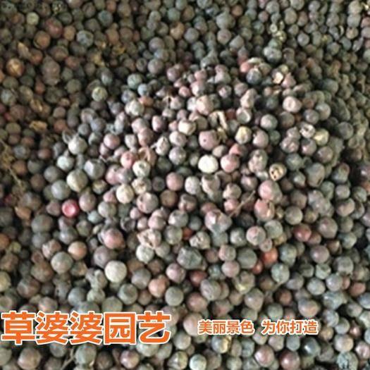 沭阳县 南天竹种子新种子包邮