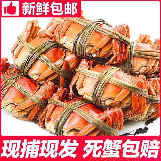 太仓市 大闸蟹全母鲜*螃蟹大闸蟹礼盒装海鲜*体1.9-2.3两
