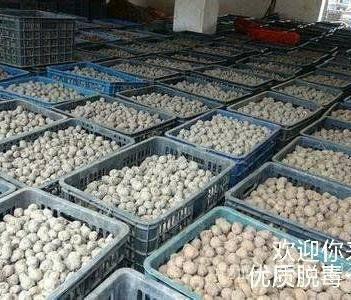长期批发魔芋种子、提供技术指导、商品芋可回收。全国各地包邮