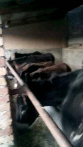 陇南礼县 出售大量幼驴,肉驴。