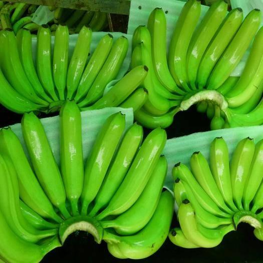 湛江 广东香蕉