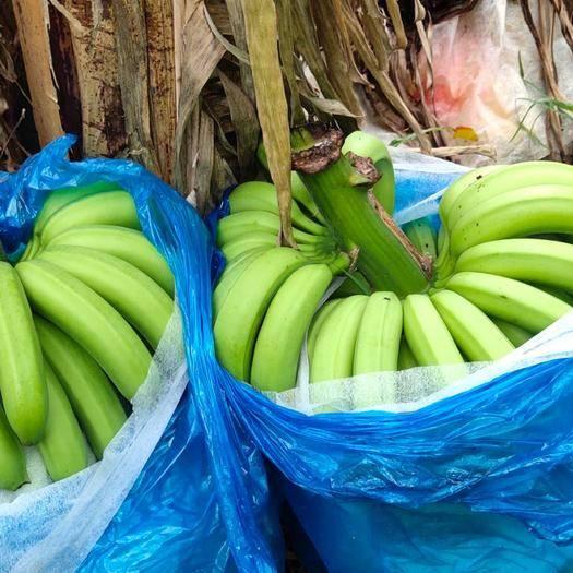 红河河口瑶族自治县 本人长年代办香蕉,本人也种植了一万多珠