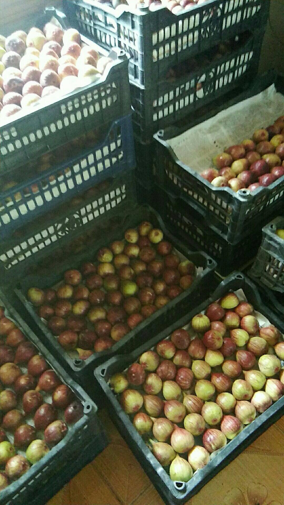 自产自销的无花果批发价两块五一斤,江心洲,自己带框子,上门。