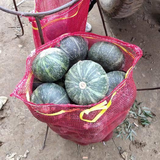 吴起县 精品1斤以上的南瓜