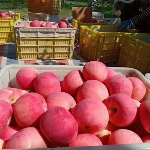 洛川县 陕西高原延安洛川纸袋红富苹果10斤装脆甜口感多规格包装。
