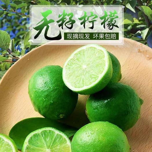 昌江昌江黎族自治县 A级台湾无籽青柠檬,300亩果园,基地直摘,长期供货。