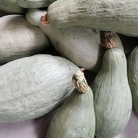 正镶白旗 内蒙锡林郭勒正镶白旗生态种植健康首选,栗味贵族南瓜香、糯甘甜