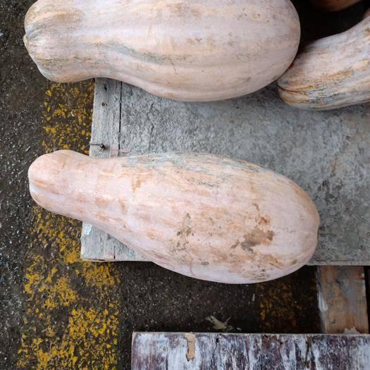 丹江口市亚蔬蜜本 10000斤起十堰市区可配送