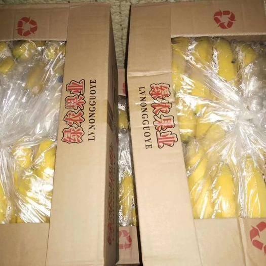 邯郸广东香蕉2号 云南焦,口感好,把形好颜色鲜亮。