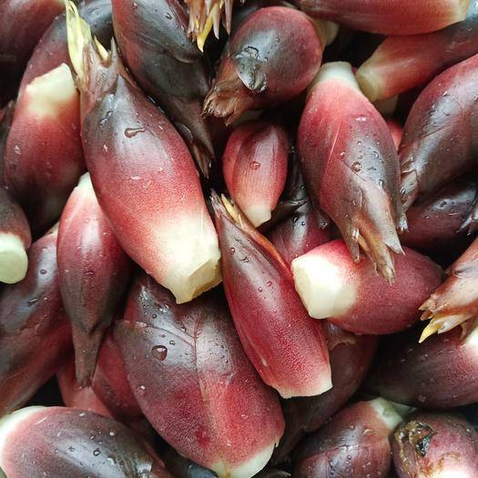 陕西省汉中市汉台区阳荷 洋荷,是一种多年生草本植物,它是一种药食同源的植物,。