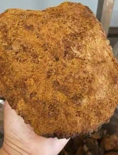安國市 樺樹茸 (進口)樺褐靈芝茶 代茶飲三高的克星 1斤包郵